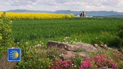 Pilgern auf deutschen Jakobswegen, hier zwischen Rothenburg o.d.T. und Rottenburg a.N.