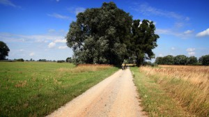 Radweg im Verlauf Mittelelbe