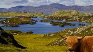 Insel Harris und Highland Cattle